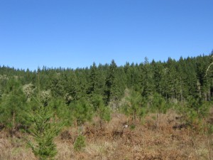 Oregon Acreage For Sale